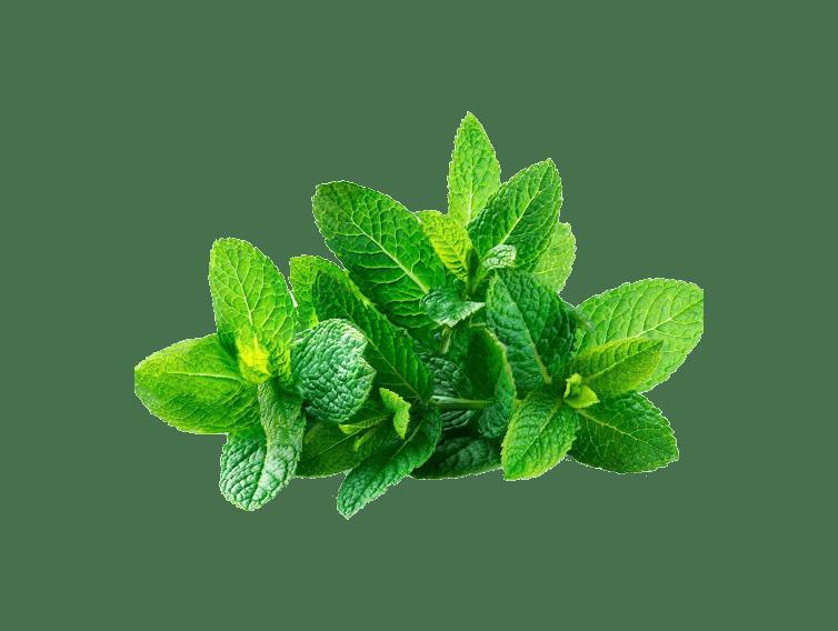 Mint Leaves kg