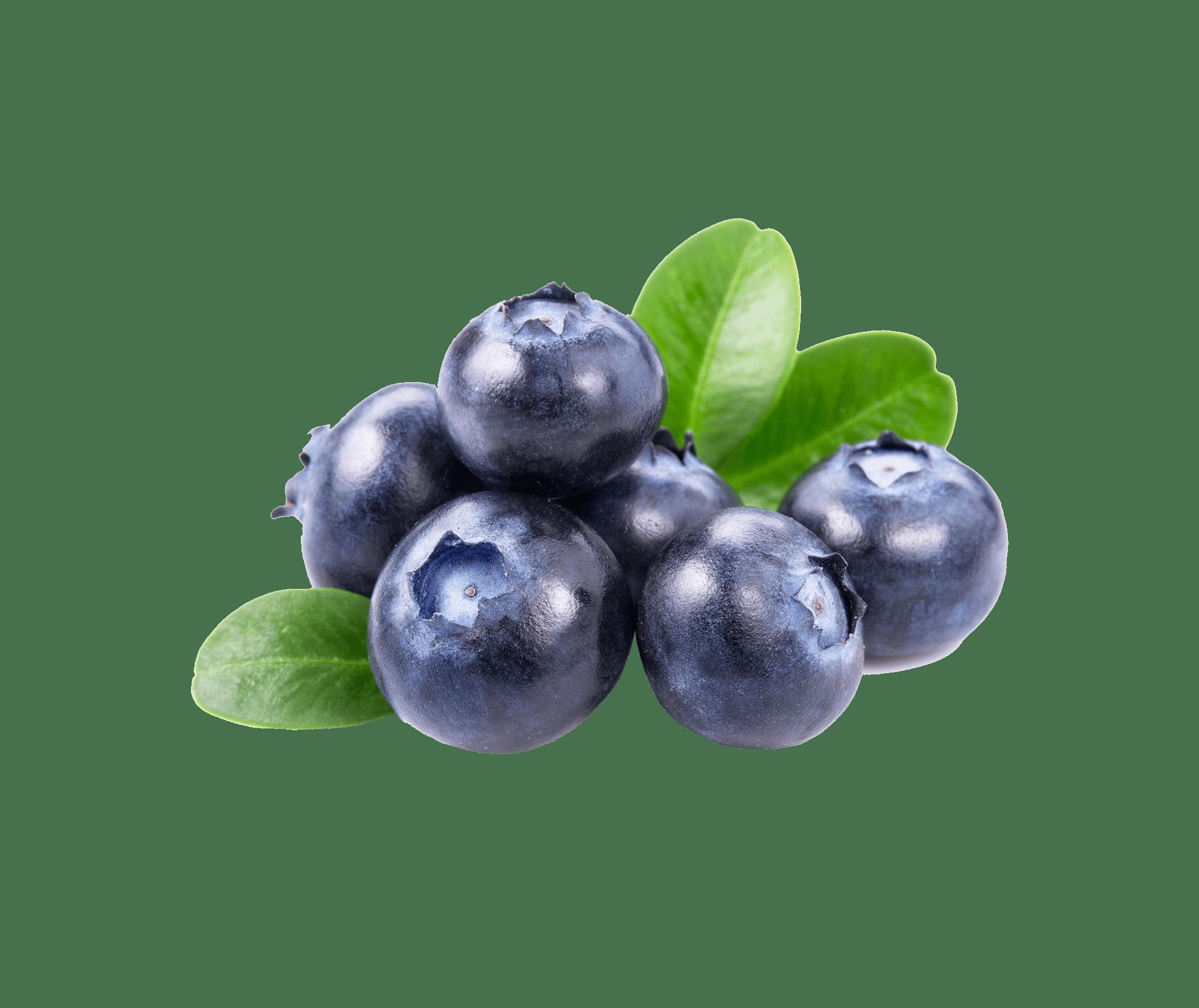 Blueberry - Черника